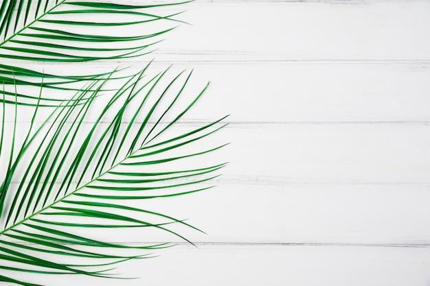 机の上の植物の葉