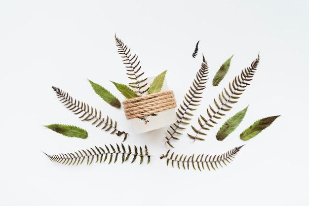 白い背景で隔離の文字列と結ばれる葉