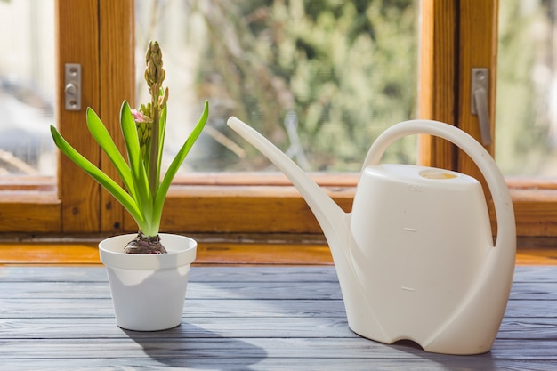 Растительный и садовый натюрморт