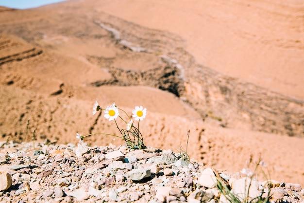 砂漠の風景