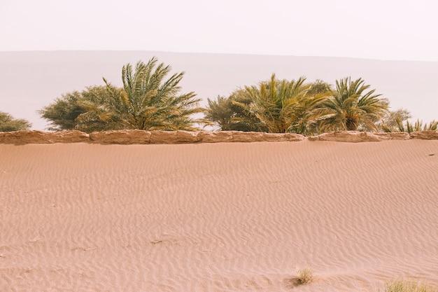 Пустынный ландшафт в марокко