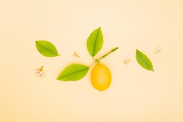 Вид сверху лимон с листьями