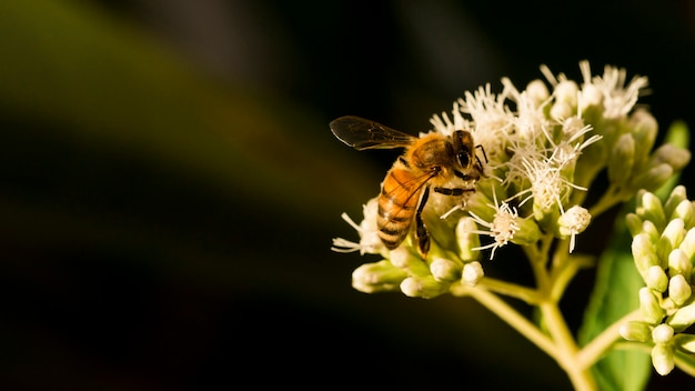 花粉を探している蜂