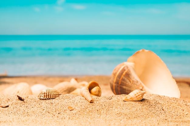 砂浜のビーチで貝殻