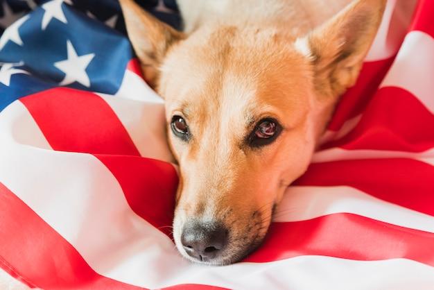 アメリカの国旗の上に横たわる犬の頭