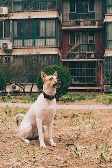 Собака сидит на лужайке