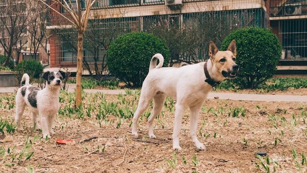 市内の芝生の上を歩く犬