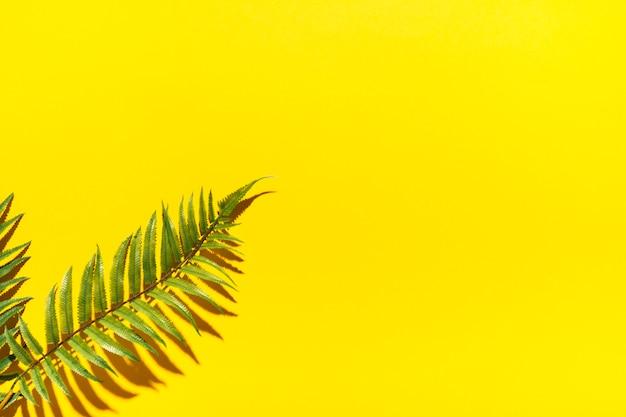 カラフルな表面に熱帯のヤシの枝