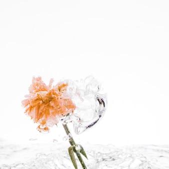 オレンジ色のカーネーションが水に落ちる