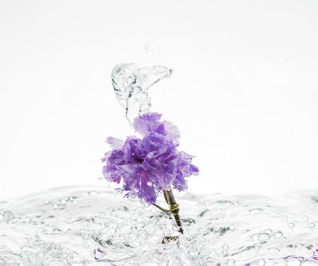 紫色のカーネーションが水に落ちる