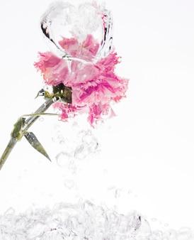 ピンクのカーネーションが水に落ちる