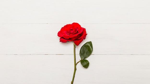 白い木製の背景に赤いバラ