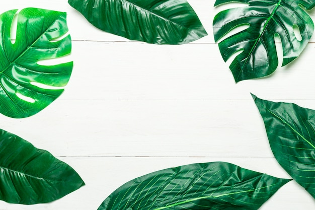白い背景の上の緑の葉