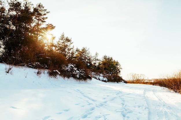 木と雪に覆われた風景の上のスキーコース