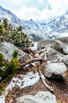 雪に覆われた山の岩の多い風景に倒れた木のクローズアップ