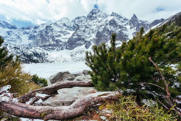 湖と冬の山の近くの緑のモミの木