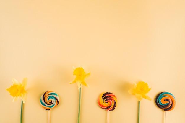 黄色の水仙とベージュの背景にカラフルな渦巻きロリポップ