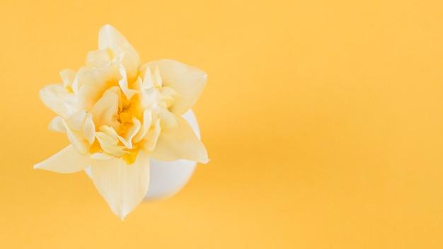 黄色の背景に美しい花の高架ビュー