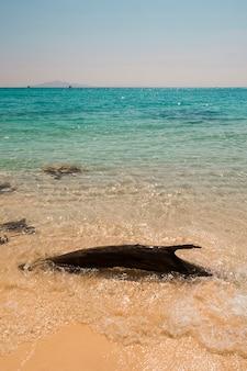 クリスタルの海の海岸近くの流木