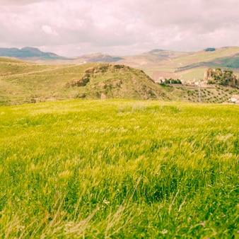 農村の明るい緑の野原