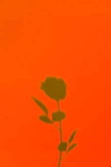 オレンジ色の背景にバラの影