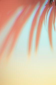 色付きの背景上の葉の影