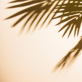 ベージュ色の背景上の葉の影