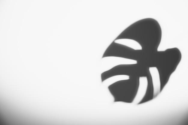 白い背景に黒のモンステラの葉