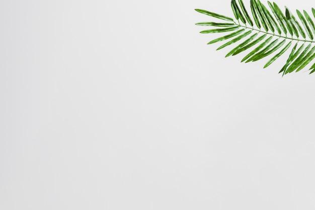白い背景の角に自然の緑のヤシの葉