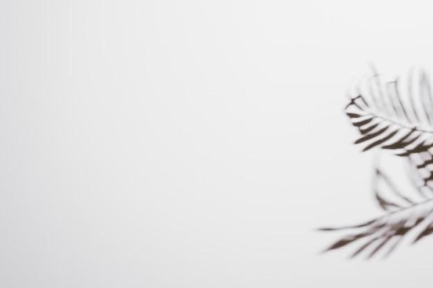 白い背景の上の新鮮な熱帯日付ヤシの葉影