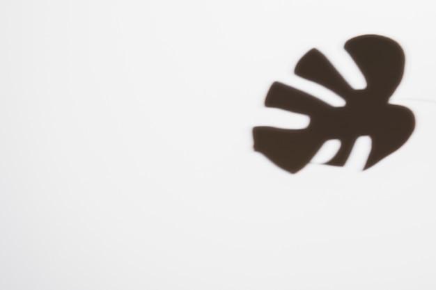 白い背景の上の暗い黒モンステラの葉