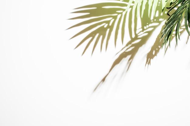 ライトグリーンの葉の白い背景の上の反射