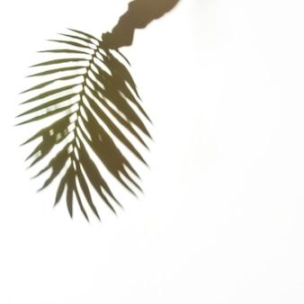 白い背景の上のヤシの葉を持っている手の影