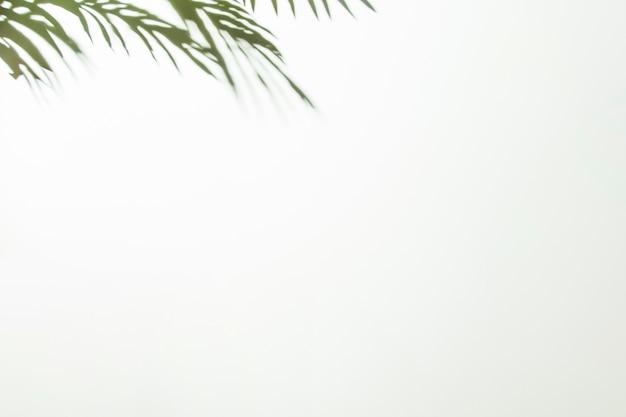 白い背景の隅に緑の葉