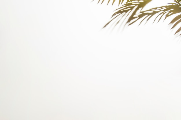 Листья тени на белом фоне