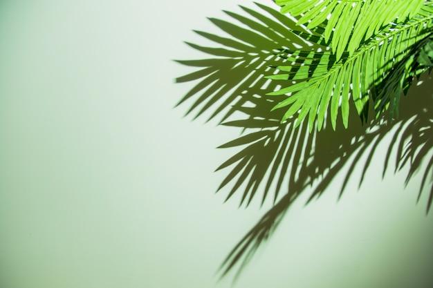 Зеленые листья с тенью на цветном фоне
