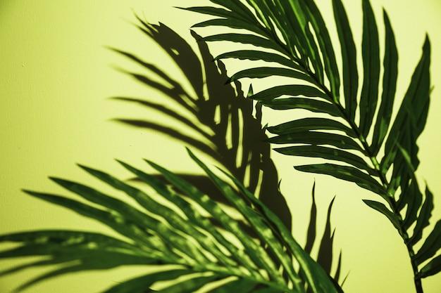 ミントグリーンの背景に葉の緑のヤシのクローズアップ