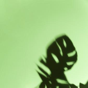 ミントグリーンの背景に黒の暗いモンステラの葉