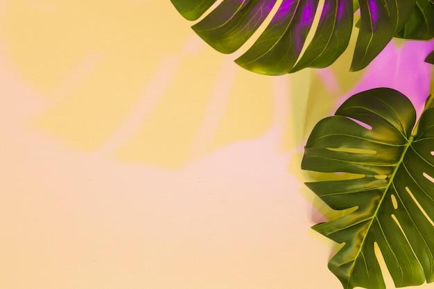 ベージュの背景の上のモンステラの葉に黄色とピンク色の影