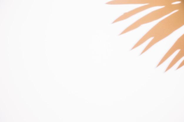 白い背景の隅に葉の影のクローズアップ