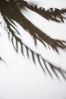 白い背景で隔離のヤシの葉の影