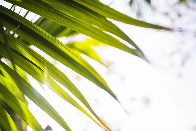 日光の下でヤシの葉のクローズアップ