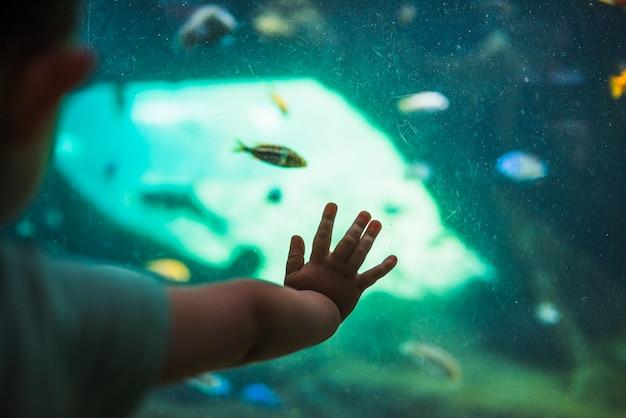 魚の水槽に子供の手のクローズアップ