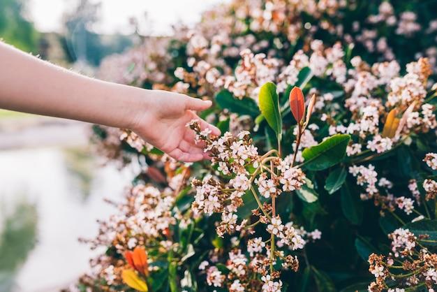 人間の手が公園の花に触れる