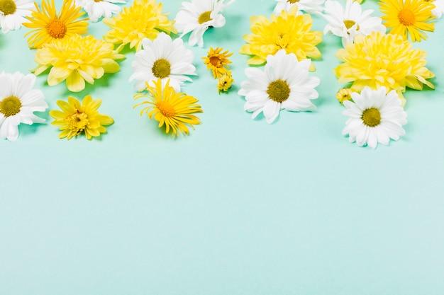 装飾的なデイジーの花