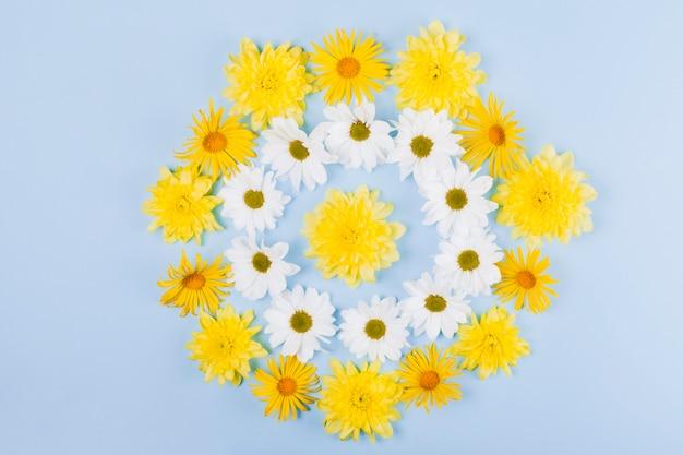円形のデイジーの花