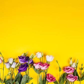 Декоративные разноцветные розы