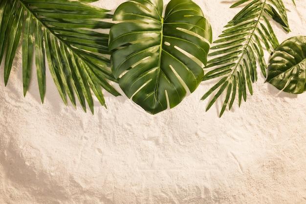砂の上の様々な植物