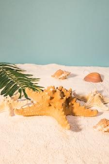 太陽が降り注ぐビーチのヒトデ