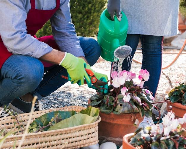 男性と女性の庭師は庭で植物を剪定して水をまきます